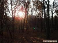 drzewokrzew_042