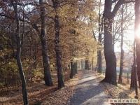drzewokrzew_043