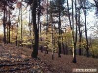 drzewokrzew_045