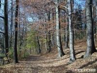 drzewokrzew_048