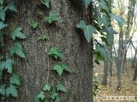 drzewokrzew_050