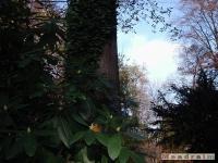 drzewokrzew_052