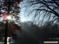 drzewokrzew_060