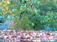 drzewokrzew_065