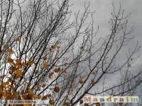drzewokrzew_070