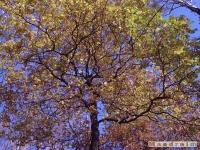 drzewokrzew_071