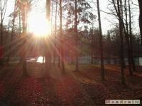 drzewokrzew_077