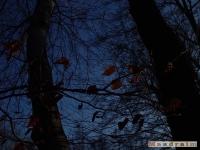 drzewokrzew_078
