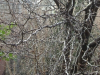 drzewokrzew_085