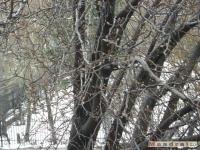 drzewokrzew_090
