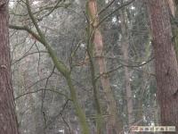 drzewokrzew_091