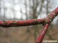 drzewokrzew_095