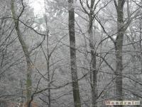 drzewokrzew_096
