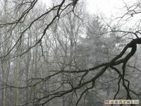 drzewokrzew_098