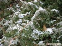 drzewokrzew_103
