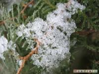 drzewokrzew_104