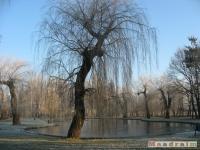 drzewokrzew_112
