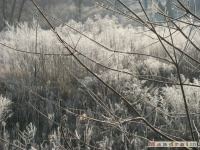 drzewokrzew_118