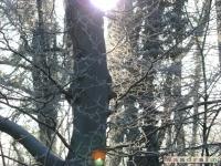 drzewokrzew_120