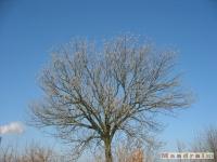 drzewokrzew_128