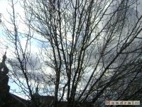 drzewokrzew_133