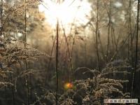 drzewokrzew_140