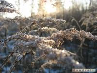 drzewokrzew_141