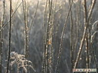 drzewokrzew_142