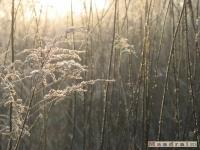 drzewokrzew_143