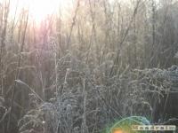 drzewokrzew_144