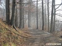 drzewokrzew_150