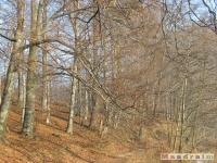 drzewokrzew_153