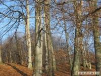 drzewokrzew_154