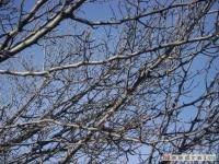 drzewokrzew_169