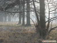 drzewokrzew_171