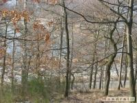 drzewokrzew_181