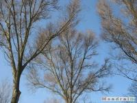 drzewokrzew_187