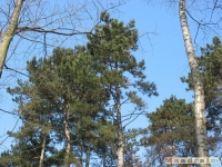 drzewokrzew_188