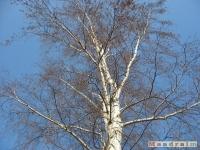 drzewokrzew_203