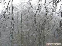drzewokrzew_214