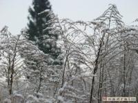 drzewokrzew_215