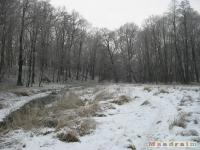 drzewokrzew_219
