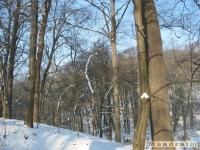 drzewokrzew_223