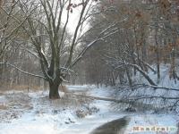 drzewokrzew_225