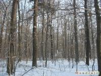 drzewokrzew_227