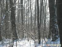 drzewokrzew_228