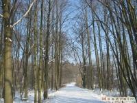 drzewokrzew_230