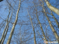 drzewokrzew_231