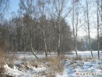 drzewokrzew_232