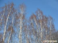 drzewokrzew_233